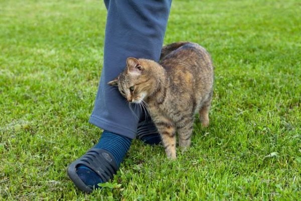 猫が甘える仕草