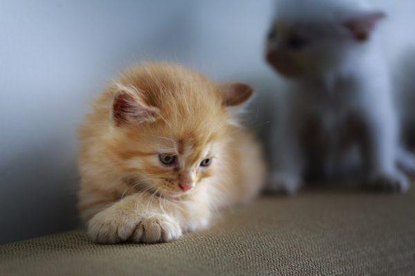 猫が悲しむ仕草